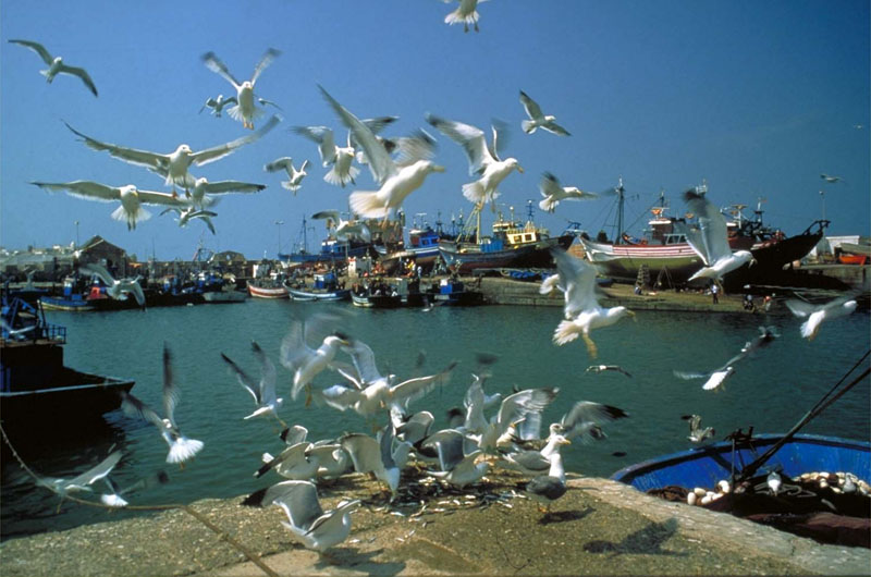 day trip to essaouira